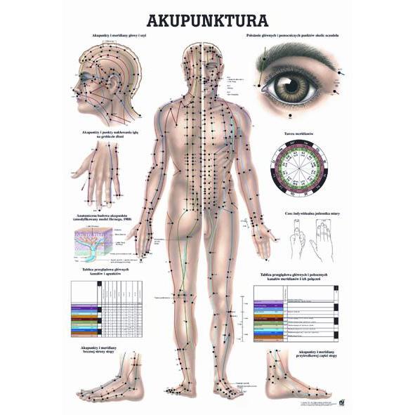 Tablica edukacyjna, plansza akupunktura