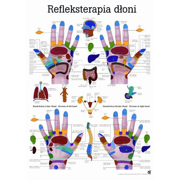 Tablica edukacyjna, plansza refleksoterapia dłoni