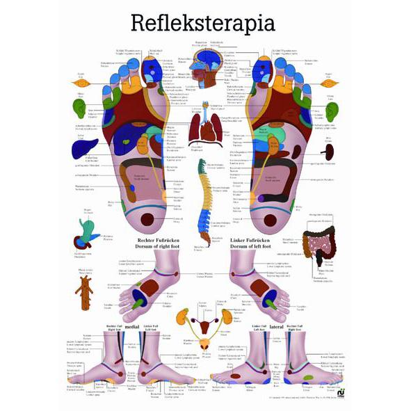 plansza refleksoterapia
